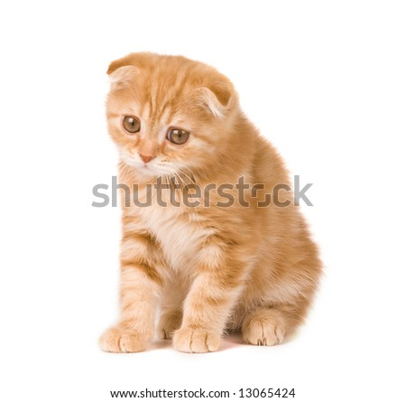 sad kitten - stock photo