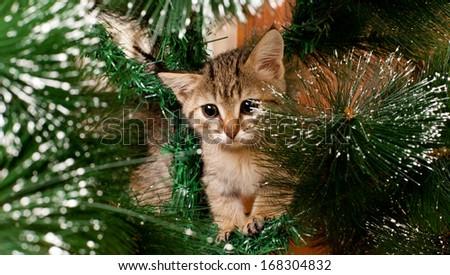Sad kitten on a fi tree - stock photo