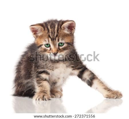 Sad little kitten isolated on white background - stock photo
