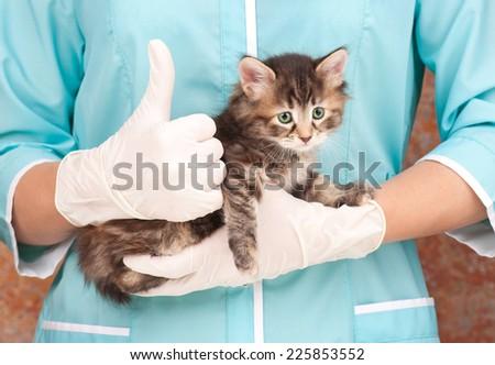 Sad little kitten on hands at the veterinarian - stock photo