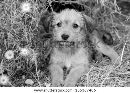 Sad lonely homeless puppy looking in the eyes. B&W - stock photo
