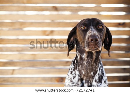 sad looking dog in front of wooden fence. - stock photo