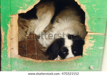 Dog resting stone close photo stock photo 585110959 shutterstock - Dogs for small spaces concept ...