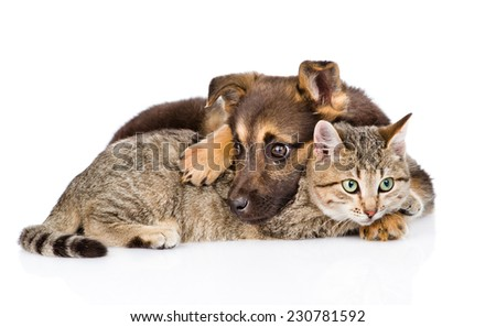 sad mixed breed dog embracing tabby cat. isolated on white background - stock photo