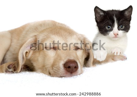 sad puppy and kitten lying - stock photo