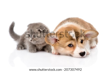 sad puppy and kitten together. isolated on white background - stock photo