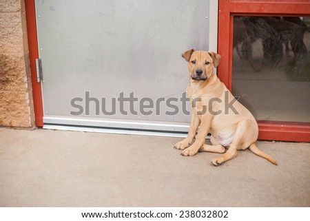Sad puppy dog waits outside by the door at the animal shelter - stock photo