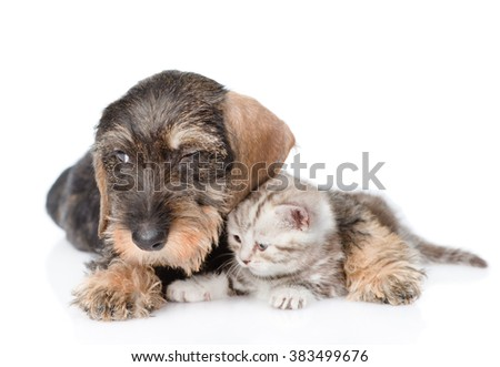 Sad puppy embracing tiny kitten. isolated on white background
