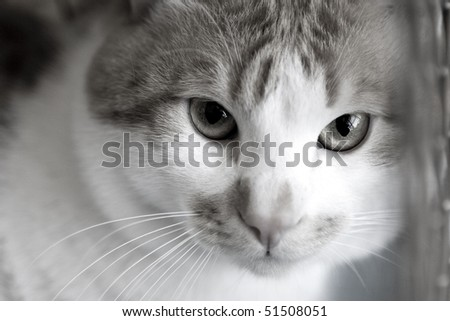 Sad red cat breeds bobtail in a cage at the exhibition - stock photo