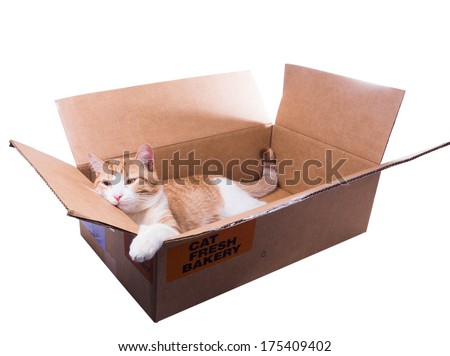 Sad red cat is in a cardboard box - stock photo