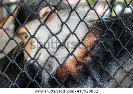 Sad Red monkey behind the Cage ,monkey in cage at zoo