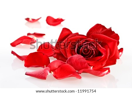 Sad rose - stock photo
