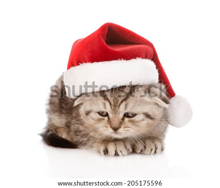 sad scottish kitten with red santa hat. isolated on white background - stock photo