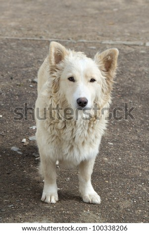 sad stray dog on the street - stock photo