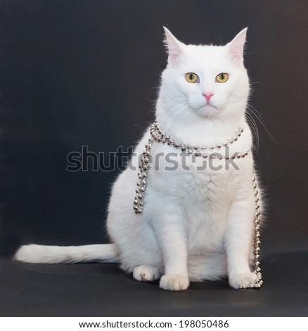 Sad white cat with yellow eyes with silver Christmas beads around his neck on black background - stock photo