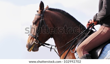 saddle up horse in bridle with sky background behind - stock photo