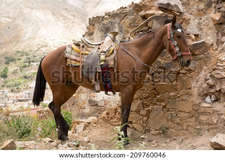 saddled up tour horse in Real de Catorce Mexico - stock photo