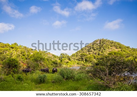 Safari in Mzkuze Falls  South Africa - stock photo