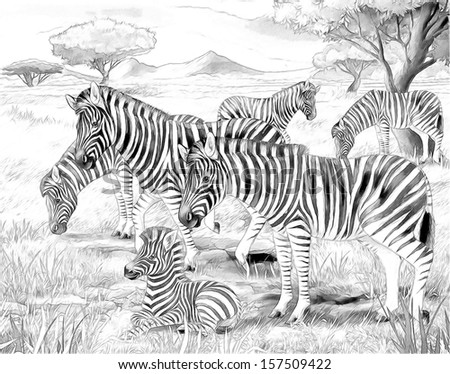 Safari - zebras - coloring page - illustration for the children - stock photo