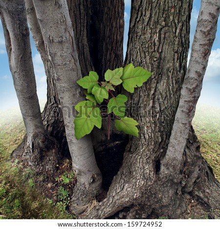 Safe investment business concept as a new green sapling protected and nurtured by larger established trees growing around the budding team member as a financial metaphor for a secure place to invest. - stock photo