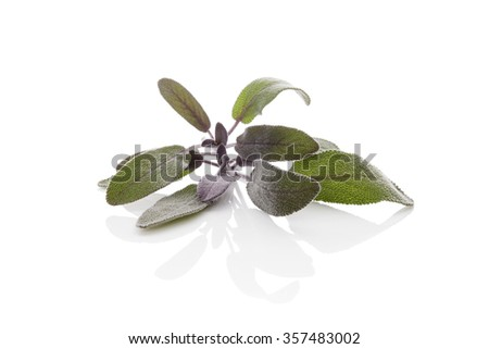 Sage herb isolated on white background. Culinary herb, alternative medicine.  - stock photo