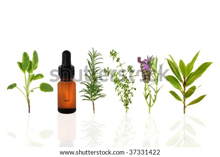 Sage, lavender, rosemary, lemon thyme and bay leaf herbs, with an aromatherapy essential oil dropper bottle, over white background with reflection.