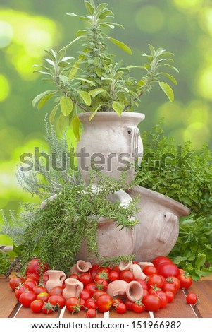 sage, oregano, curry, basil and rosemary grow in a decorative herb pot decorated with tomatoes and small amphoras - stock photo