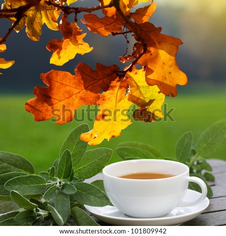 Sage tea with green leaves served on the terrace, in autumn. - stock photo