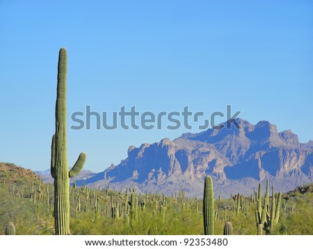 Saguaro cacti glowing in morning light in Usery Mountain Park in Mesa, Arizona, where the Superstition Mountains form a towering spectacle over the desert.