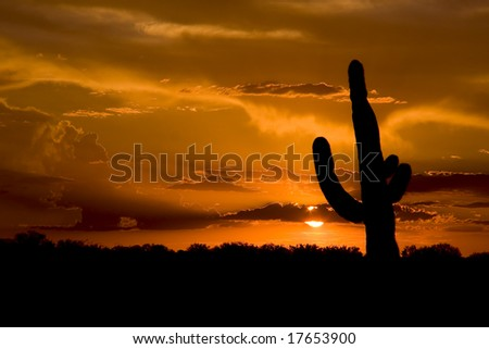 Saguaro Cactus at Sunset - stock photo