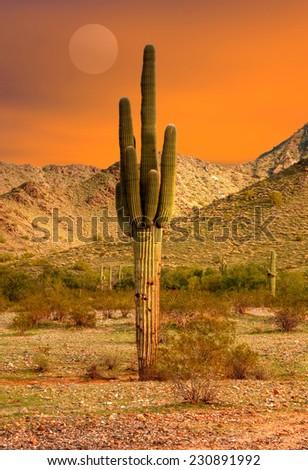 Saguaro Cactus cereus giganteus in Arizona desert - stock photo
