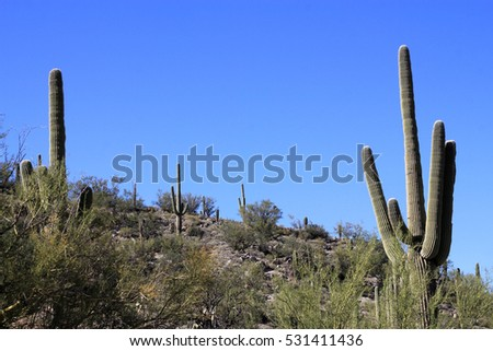Saguaro national park in USA