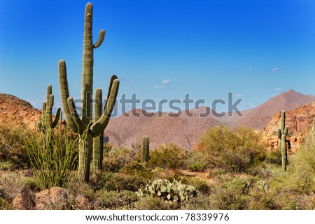 Saguaro, ocotillo and the mountains of the Tonto National Forest, Arizona - stock photo