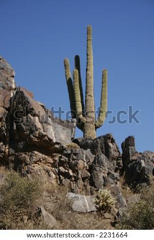 Saguaro Outcrop - stock photo