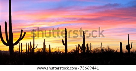 Saguaro silhouetten in Sonoran Desert sunset lit sky. - stock photo