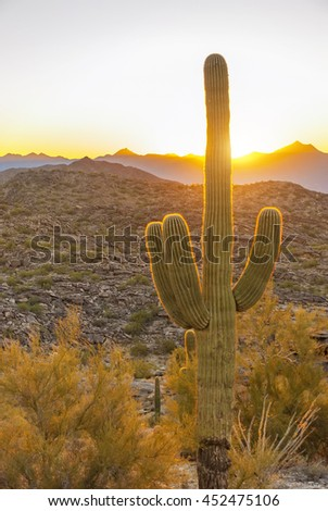 Saguaro, the most common giant cactus in Arizona, USA, in the sunset. - stock photo
