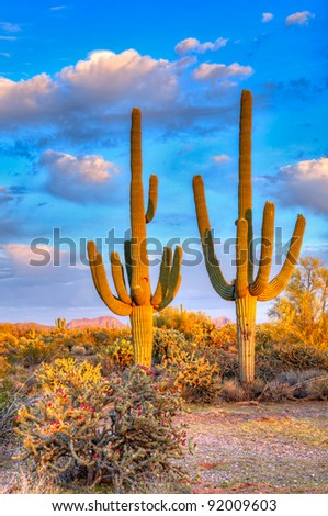 Saguaros in days last light. HDR composition - stock photo