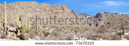 Saguaros in Finger Rock Canyon, and Finger Rock in background. - stock photo