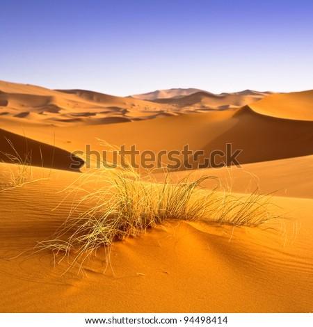 Sahara desert landscape. Desertification effects background. - stock photo