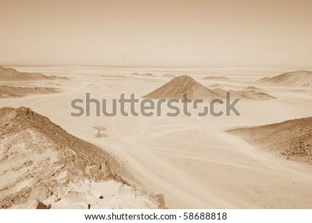 Sahara desert with lonely tree near Hurghada, Egypt - stock photo