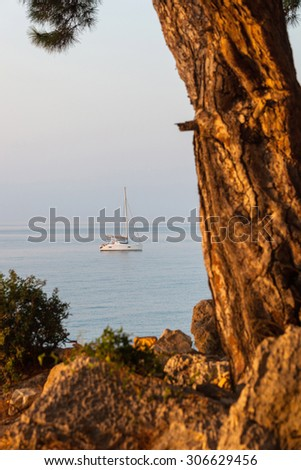 Sailing catamaran and in the foreground a huge pine tree trunk Outdoors - stock photo