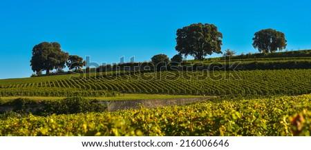 Saint-Emilion-Vineyard landscape-Vineyard south west of France - stock photo