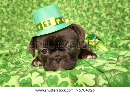 Saint Patrick day puppy on green