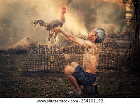 Sakon, Thailand - February 15 : Man cleaning Thai gamecock on February 15, 2015 in Sakon, Thailand - stock photo