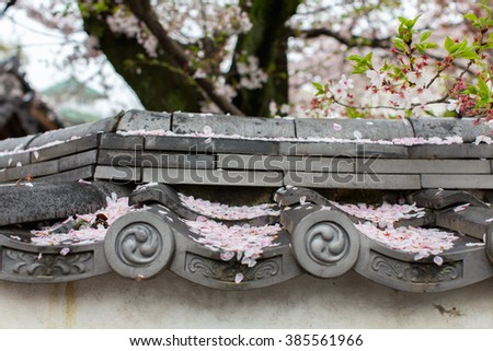 Sakura fell on the roof on a rainy day - stock photo