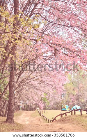 sakura flower with old color style, Thailand - stock photo