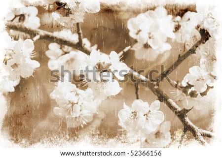 Sakura flowers (vintage style) - stock photo