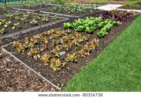 Salad Garden - stock photo