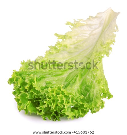 Salad leaf. Fresh lettuce one leaf isolated on white background close-up. Green vegetable lettuce - stock photo