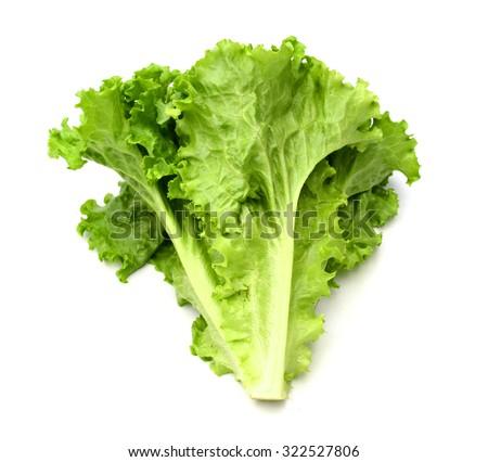 Salad leaf. Lettuce isolated on white background - stock photo